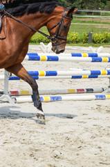 Springreiten, Training