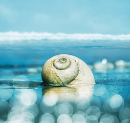 Moon Snail and Bokeh