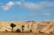 The day in Judean desert