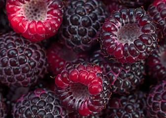Black raspberry Cumberland