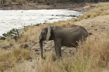 Elephant on watering point