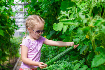 Cute little girl collects crop cucumbers in the greenhouse