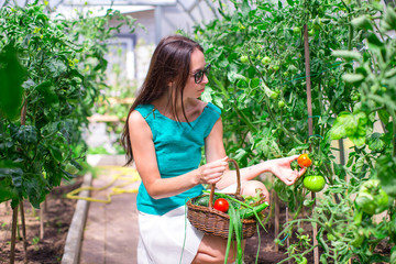 Young woman collects crop cucumbers and tomatos in greenhouse