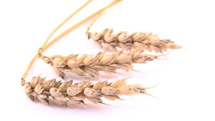 3 Getreidehalme