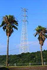 九州一の鉄塔とシュロの木
