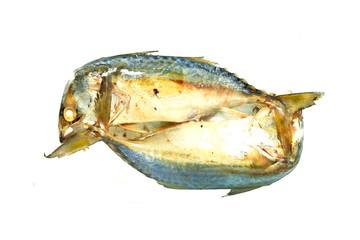 Mackerel fish isolated on the white background