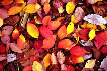 아름다운 가을풍경