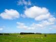 canvas print picture - sheep farm