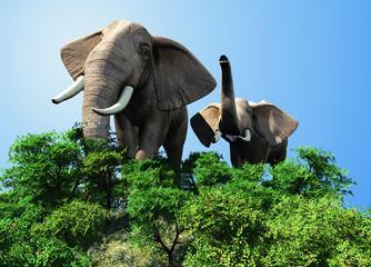 The herd of elephants