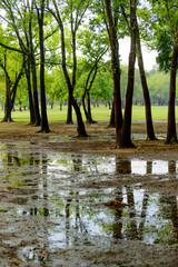 flooded park with standing water