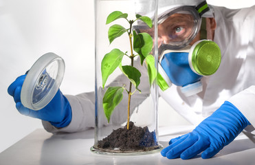 Scientist examines fumes in the environment