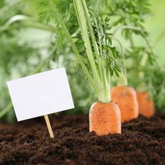 Karotten im Gemüse Garten oder Feld mit Textfreiraum