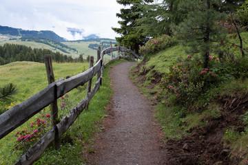 sentiero sull'Alpe di Siusi