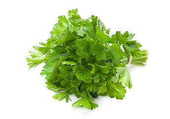 Parsley aromatic herb
