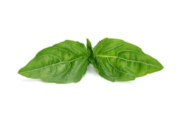 Basil herb leaf
