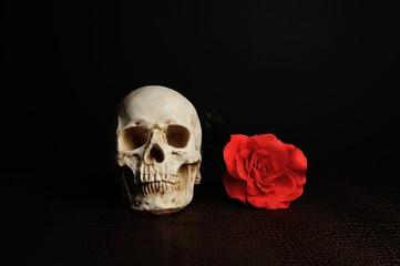 髑髏とバラの花