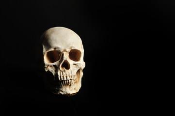 黒い背景で撮影した髑髏
