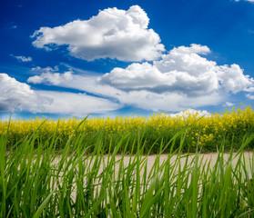 Frühsommer: Weg durch bunte Felder (Raps und Weizen)