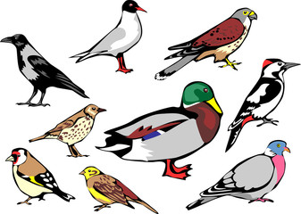 common european birds