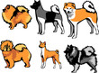������, ������: spitz type dog breeds