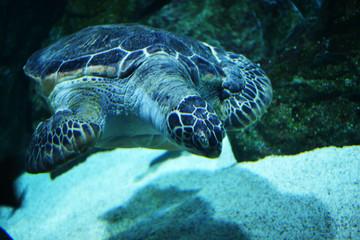 바다해양생물 및 다양한 수중생태계