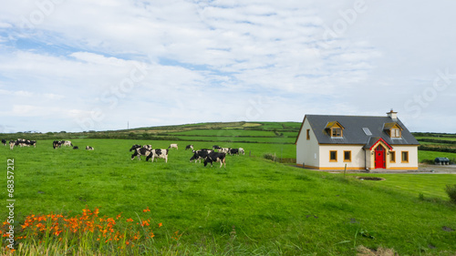 Fotobehang Noord Europa Meadow with cabin and farm animals