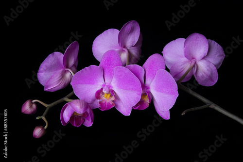 Foto op Canvas Orchidee Orchid on black