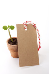 Seedling with paper tag isolated  on a white