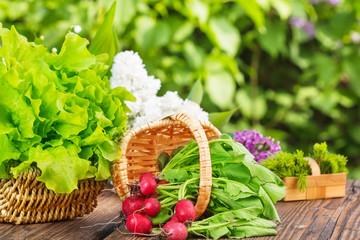 Salaternte, Radieschenernte