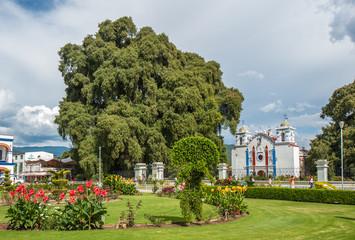 Arbol del Tule, a giant sacred tree in Tule, Oaxaca, Mexico
