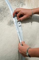 Weigh a horse