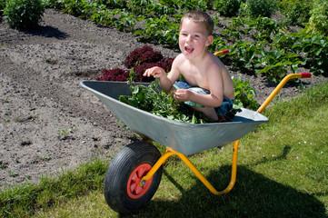 kleiner Junge spielt im Garten mit der Schubkarre