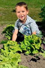 kleiner Junge erntet Salat
