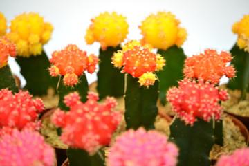 식물접사 봄꽃이미지