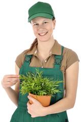 Gärtner in Latzhose mit Topfpflanze