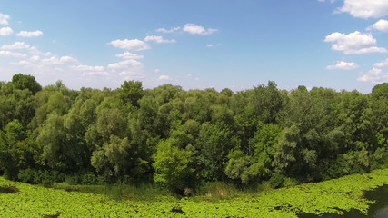Flight over  river with water-lilies. Aerial rear fly