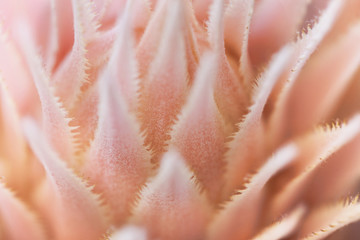 Bromeliad Bloom Abstract