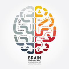 infographics vector brain design diagram line monochrome colour