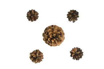 five pine cone