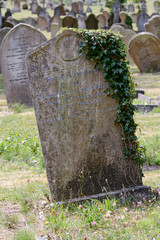 Gravestone covered in ivy