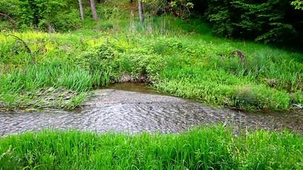 Stream flowing through green grass field
