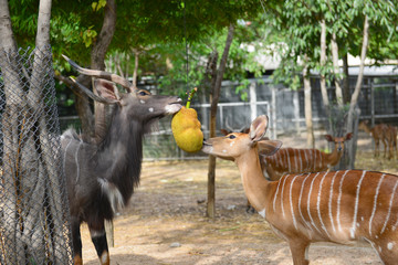 animal enrichment in zoo