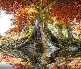 big old tree - autumn time