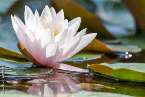 Staande foto Lotusbloem waterlily
