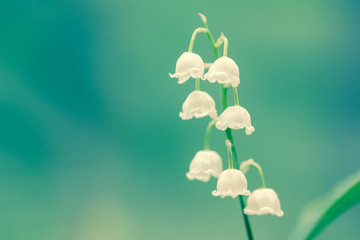lily of the valley fragrance