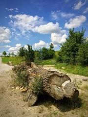 Baumstamm als natürliche Blockade