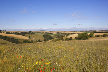 agricultural landscape with wildflowers