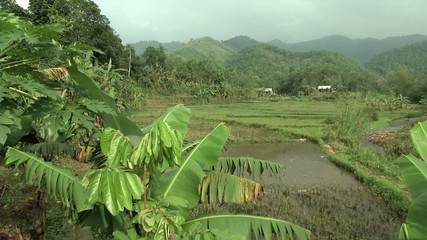 Vietnamese countryside