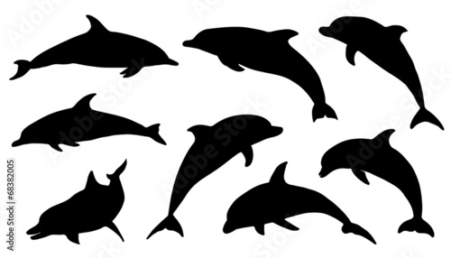 dolphin silhouettes - 68382005
