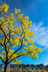 Autumn in swiss alps